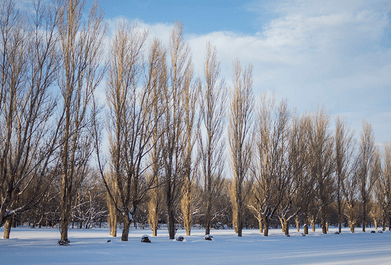 冬(蒲郡競艇場)