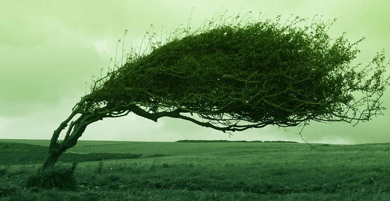 風の影響(浜名湖競艇場の予想のコツ)