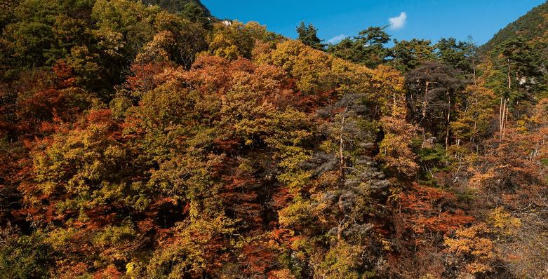 秋のコツ(平和島競艇場の予想のコツ)