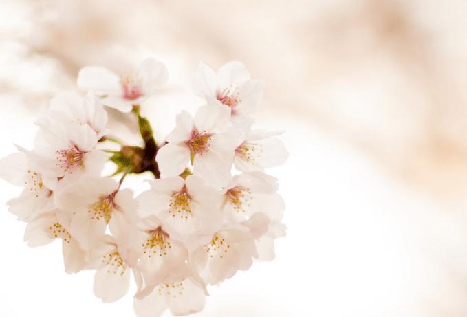 春の特徴(桐生競艇場)