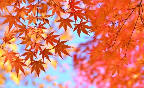 秋の特徴(津競艇場の予想のコツ)