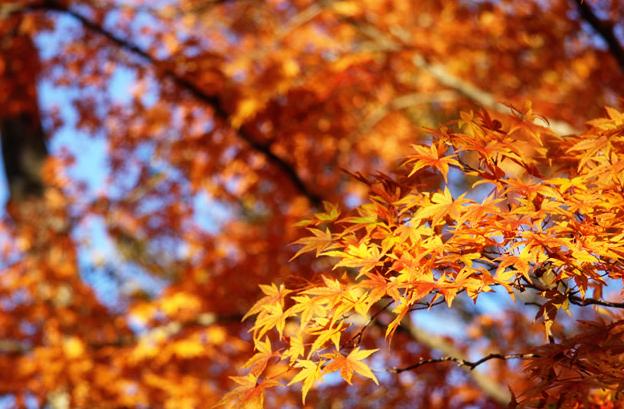 秋の特徴(浜名湖競艇場の予想のコツ)