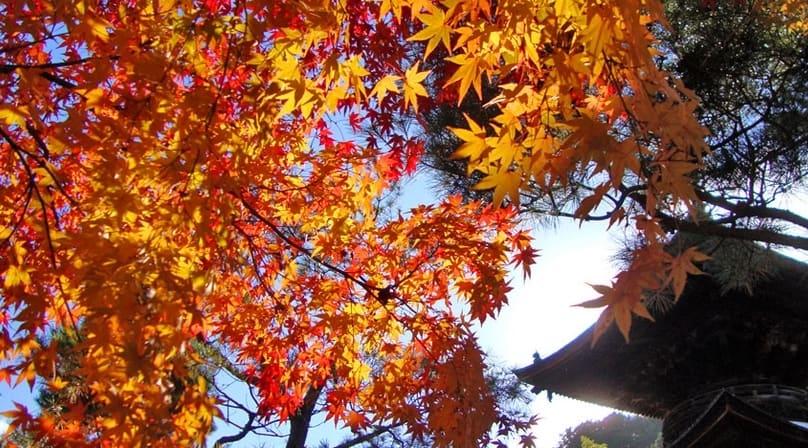 秋のコツ(常滑競艇場の予想のコツ)