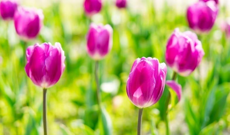 春の特徴(戸田競艇場の予想のコツ)