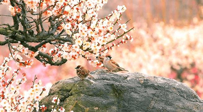 春の特徴(津競艇場の予想のコツ)