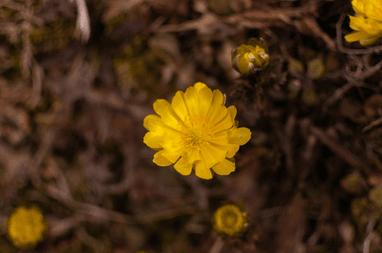 春のコツ(蒲郡競艇場)