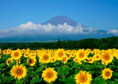 夏のコツ(蒲郡競艇場)