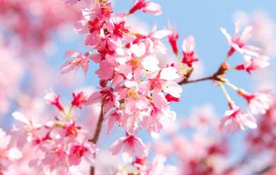 春のコツ(常滑競艇場の予想のコツ)